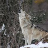 写真:一匹狼タイプは同棲・結婚してどうなる?